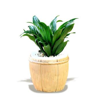 马克笔画植物树木教程
