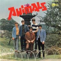 all about the animal