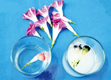 实验材料:牵牛花,小苏打,白醋,水,玻璃杯       实验步骤