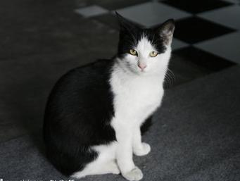 黑白色手绘简约猫