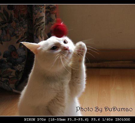 小猫滚毛线 淘气的