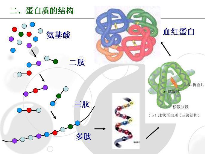 蛋白质四级结构