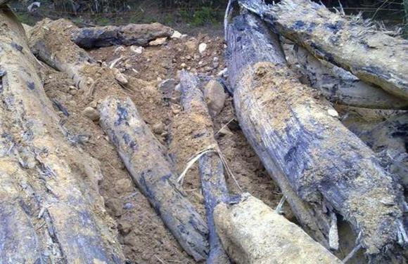 大爷后山建房挖出一堆木头,专家称半根就能在城里换一套房! - 周公乐 - xinhua8848 的博客