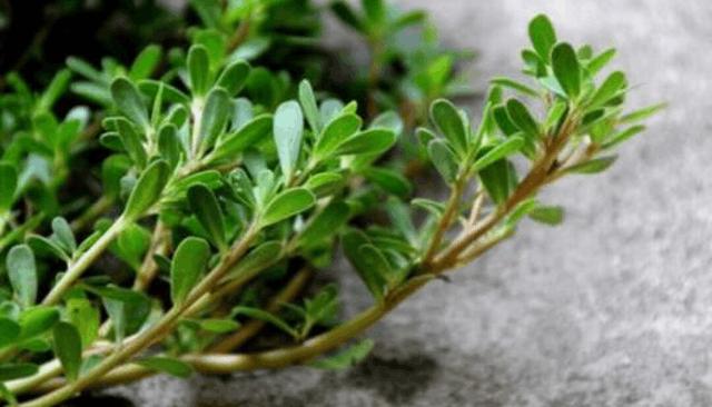 田间地头的野菜,也是防癌的美食 - 周公乐 - xinhua8848 的博客